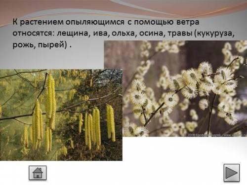 Некоторые растения деревьев и кустарников зацветают ранней весной,до распускания у них листьев.какое