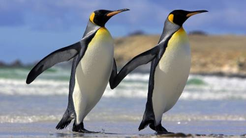 Охарактеризуйте отличительные черты трёх систематических групп класса птицы