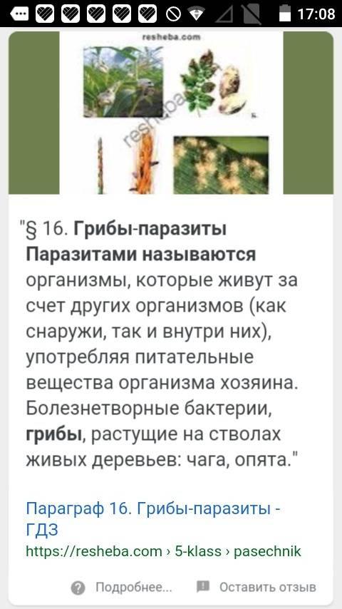 По ! 1)какие грибы называют-паразитами? 2)как происходит заражение зерновых культур головнёвыми гриб