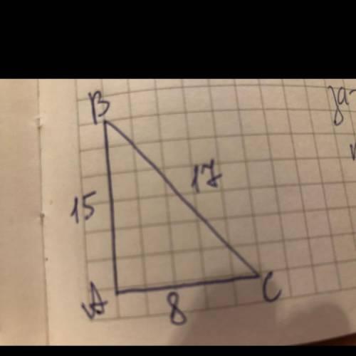 Сторони прямокутного трикутника дорівнюють 8см, 15см і 17см. Укажіть довжини катетів і гіпотенузи ць