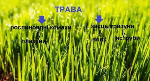 Побудуйте схему ланцюга живлення,включаючи такі компоненти:трава,заєць,вовк,плазуни,рослинноядні ком