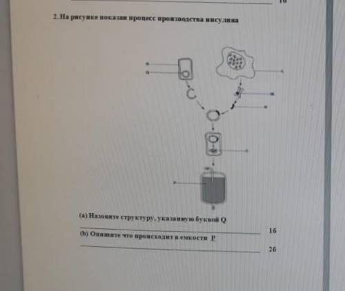 На рисунке показан процесс производства инсулина