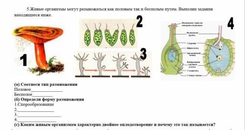 Определи форму размножения и под буквой с 